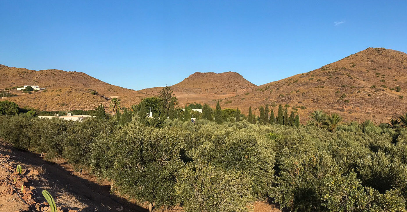 Cortijo Torre Blanca Winter in the Sun